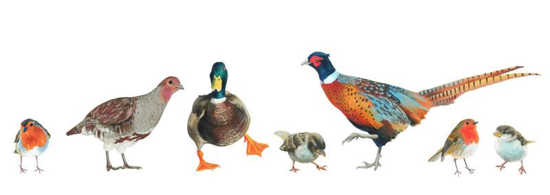 snowy pheasant family