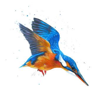 Kingfisher Dive PRINT