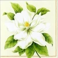 Botanic Magnolia, 25 x 25cm   (66b)