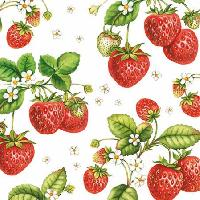 Strawberry Plant, 25 x 25cm   (49b)