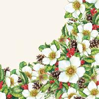Helleborus Cream, 25 x 25cm   (36b)