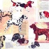Best Dog Breeds 25x25   (14b)