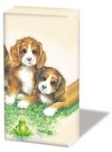 Four Doggies Handkerchief   (2c)