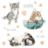 Cats 33 x 33cm   (2a)