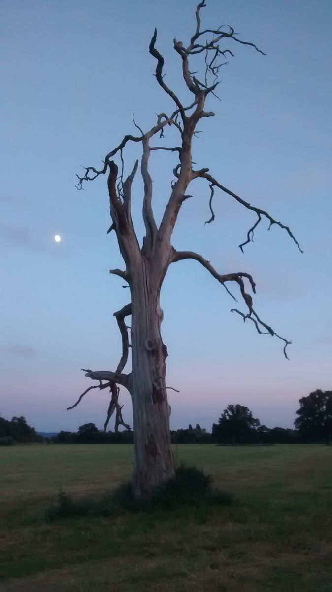 Tree and moonshot along the riverbank to the south of the Festival site ...