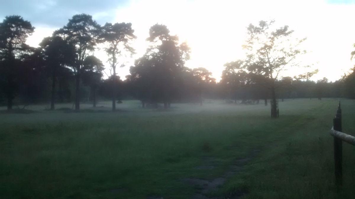 Ghostly mist on an eveing walk in Tatton Park...