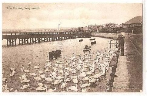 England: Dorset. The Swans Weymouth, 1904 Postcard