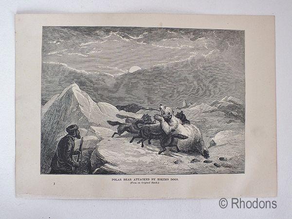 19th Century Arctic Region Print, Devils Castle, Franz Joseph Fjord, East Greenland