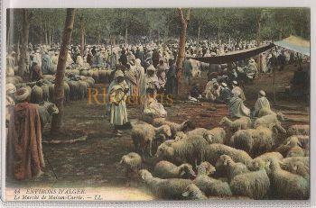 Algeria: Environs d'ALGER. Le Marché de Maison-Carré. Early 1900s Postcard