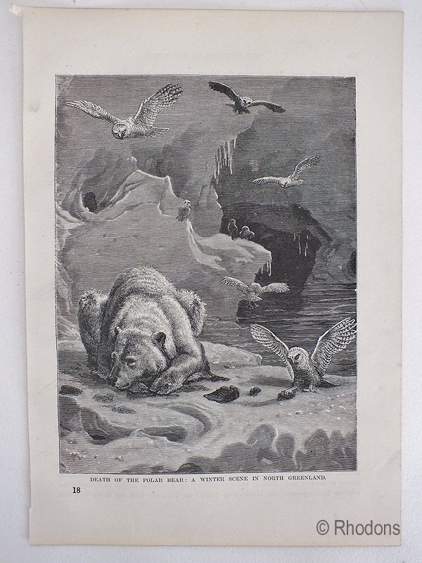 19th Century Print, Death Of The Polar Bear, A Winter Scene In North Greenland. Late 19th Century - Circa 1880s