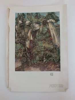 Tea Plucking In Ceylon, From the Oil Painting By Edward A Hornel, 1908