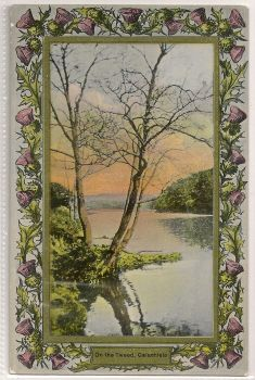 Scotland: Borders. Davidson Thistle Border Postcard - On The Tweed, Galashiels