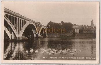 England: Northumberland. Swans At Royal Tweed Bridge, Berwick Upon Tweed. Real Photo Postcard
