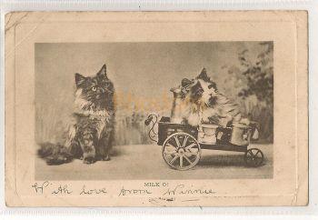 Family History Postcard:  Stapelton - London, Portland Place - 1904