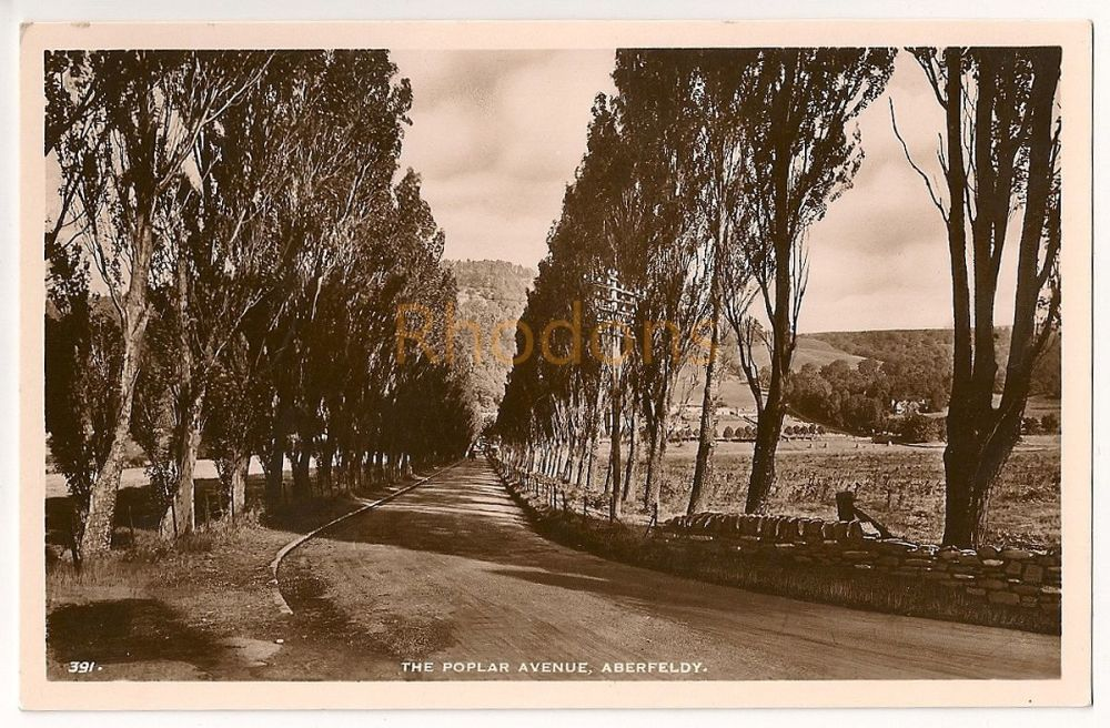 Scotland: Perth & Kinross. The Poplar Avenue, Aberfeldy. Perthshire. Real Photo Postcard