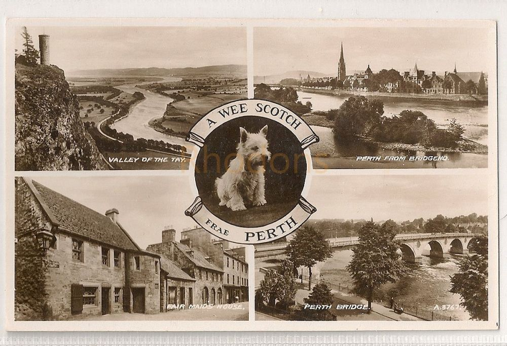 Scotland: Perth Multiview Real Photo Greetings Postcard With Scottie Dog. A Wee Scotch Frae Perth
