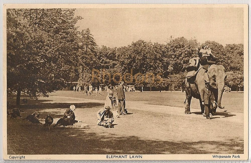 England: Bedfordshire. Elephant Lawn At Whipsnade Zoological Park. 1950s Postcard