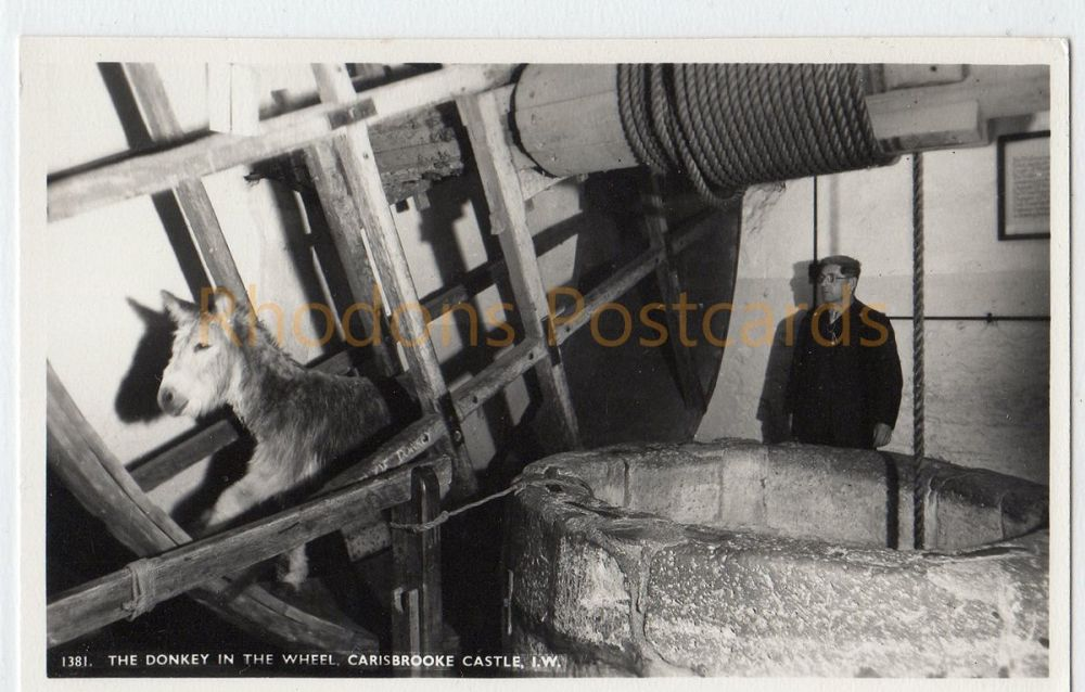 Isle of Wight:  Carisbroke Castle, The Donkey In The Wheel Real Photo Postcard