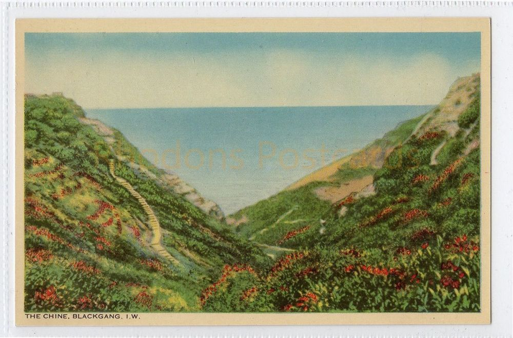 Isle of Wight: The Chine, Blackgang, IOW  Postcard  (287)