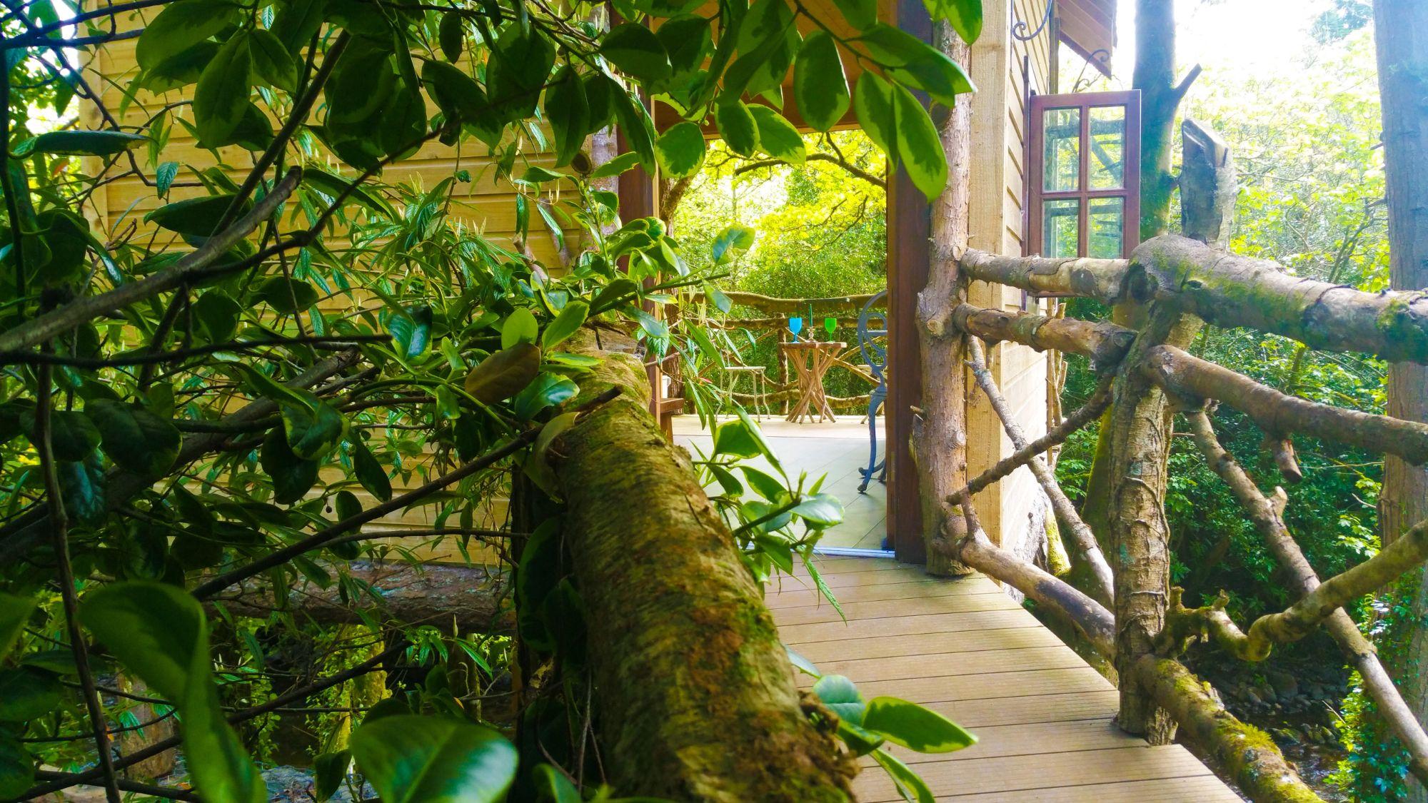 treehouse entrance.jpg