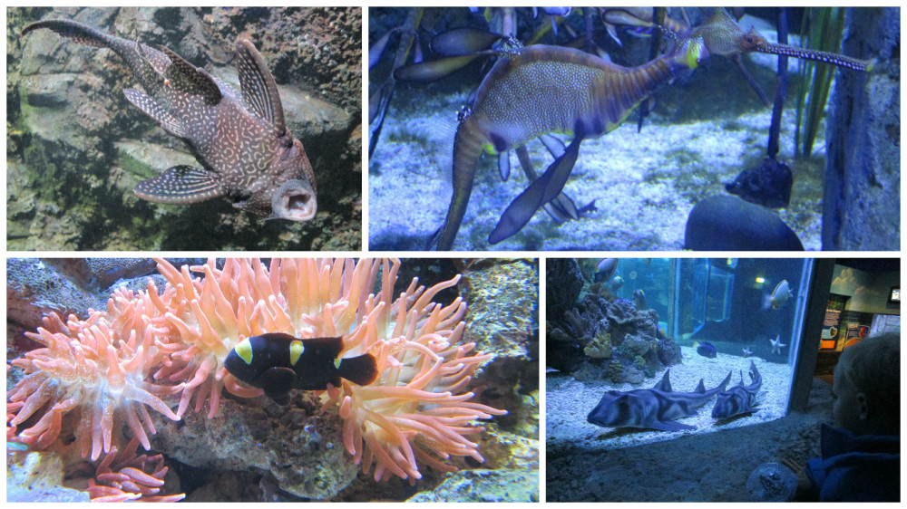 Blog fotor created sealife 1