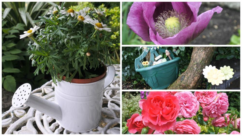 fotor cm flowers