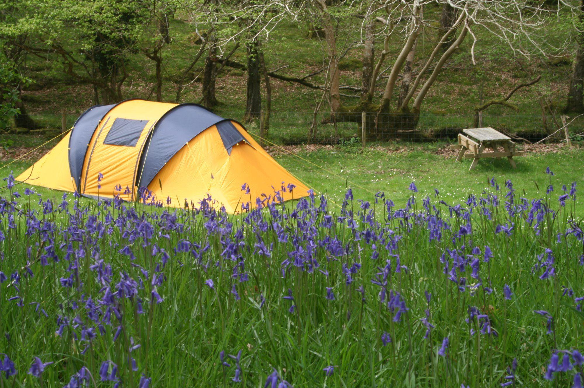 Dorset Friendly Friendly Campsites