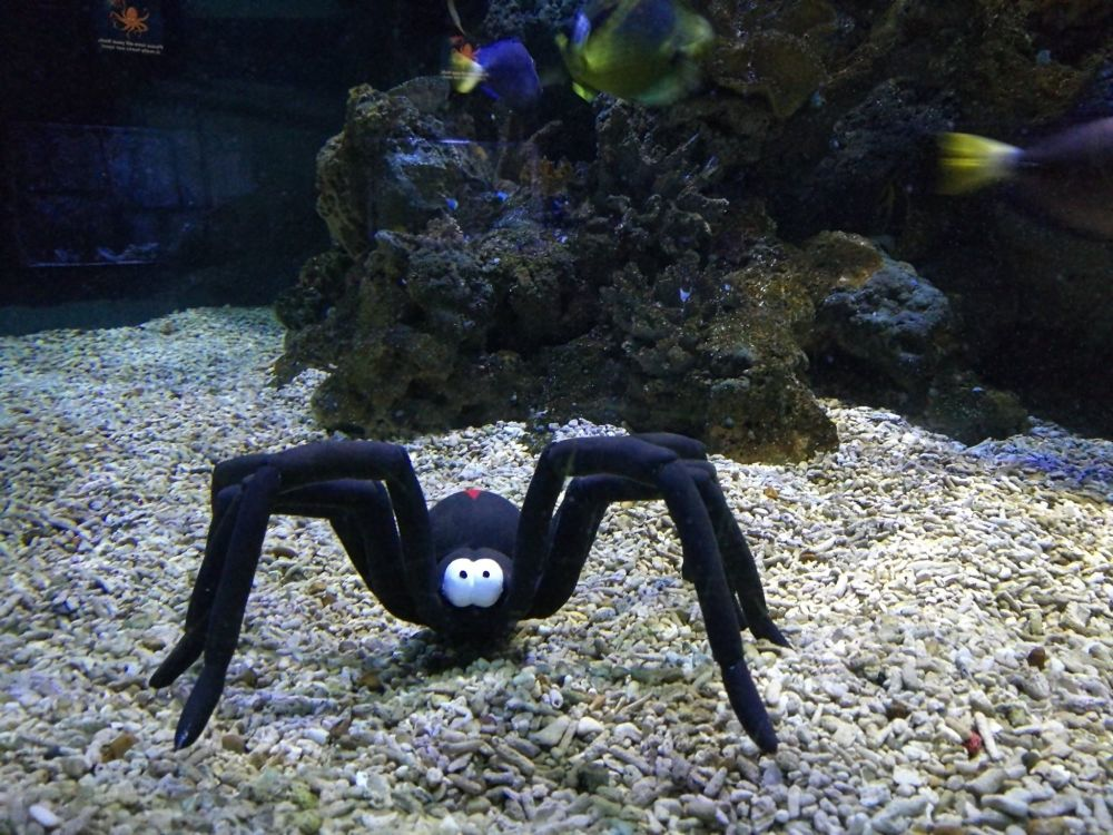 Sealife Halloween 5