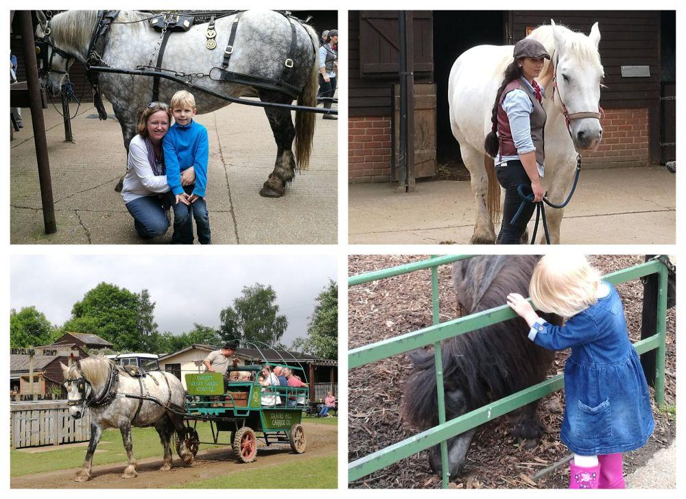 BeFunky Heavy Horse Farm 1