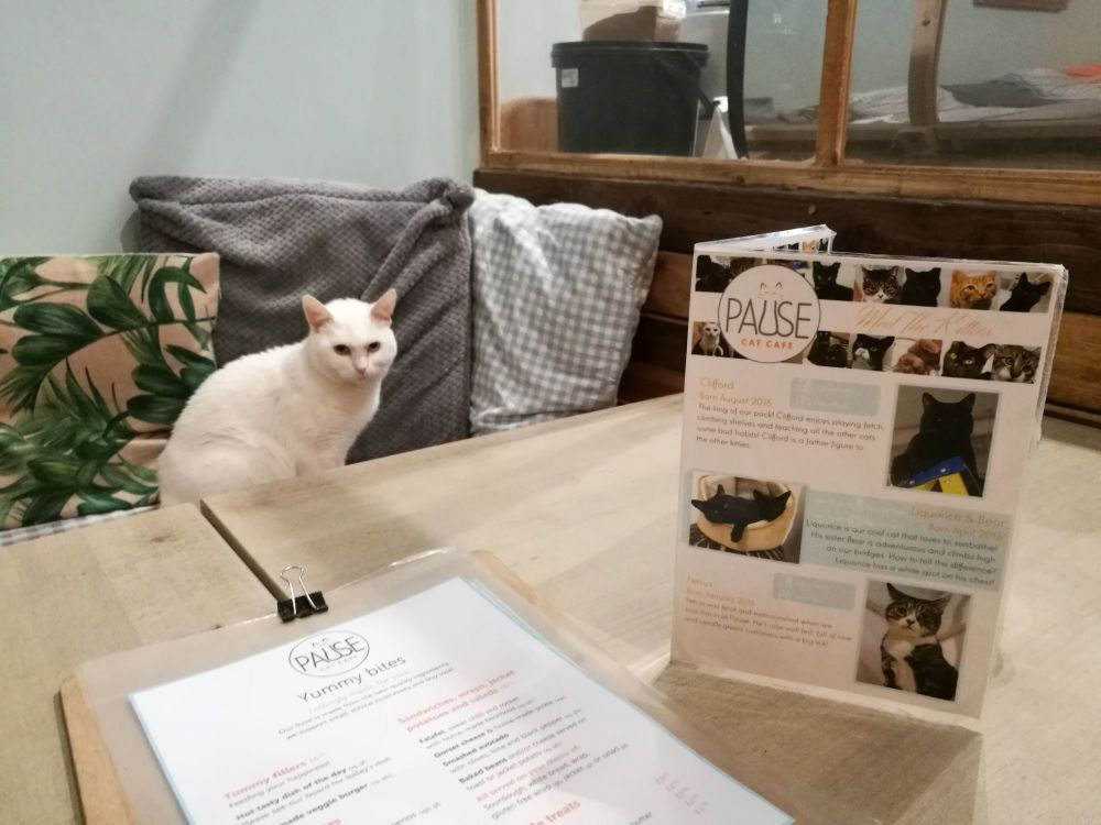 Pause Cat Cafe Bournemouth 1