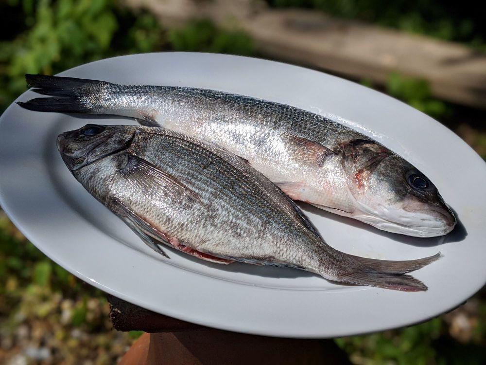 BH Fish 1