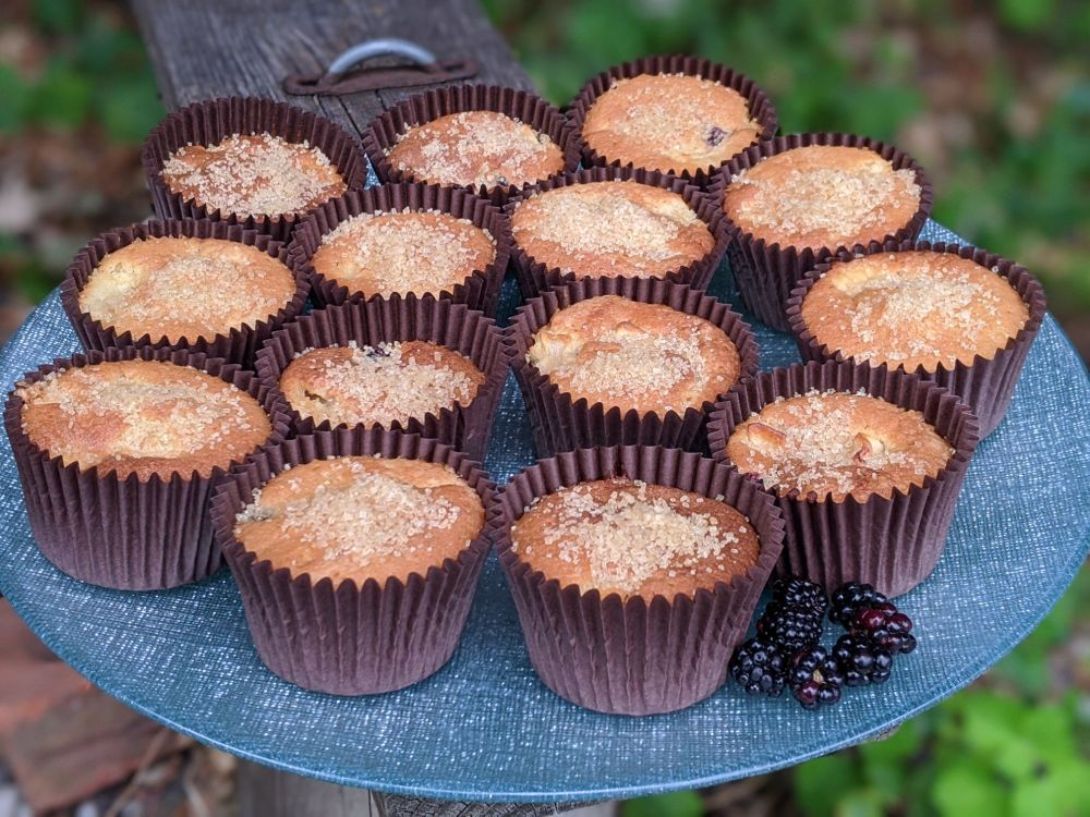 Apple and Blackberry Cupcakes Sept 2020