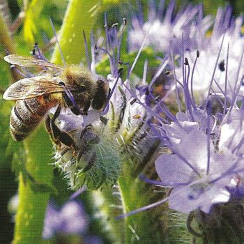 Honeybee2e