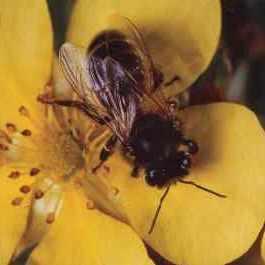 bee June