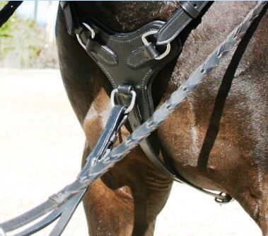 Martingales, Breastplates, Reins
