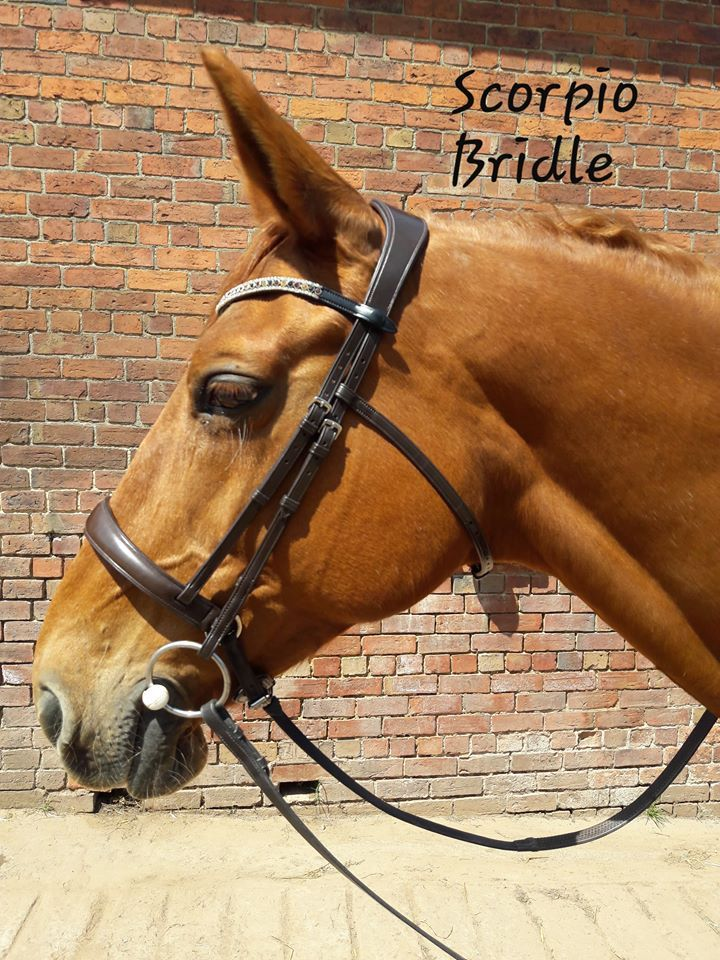 Scorpio Anatomical Bridle