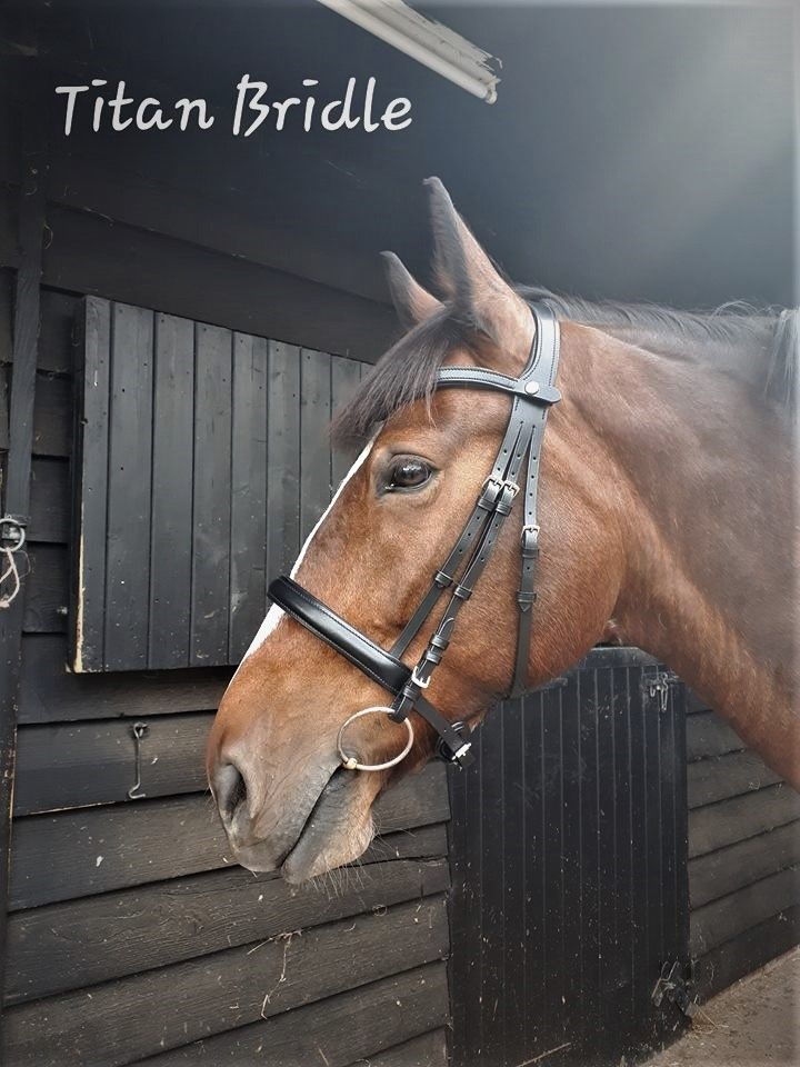 Titan Anatomical Bridle