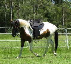 running reins - after