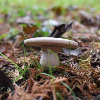 Five wooden 'field mushrooms' mushrooms / toadstools / fungi