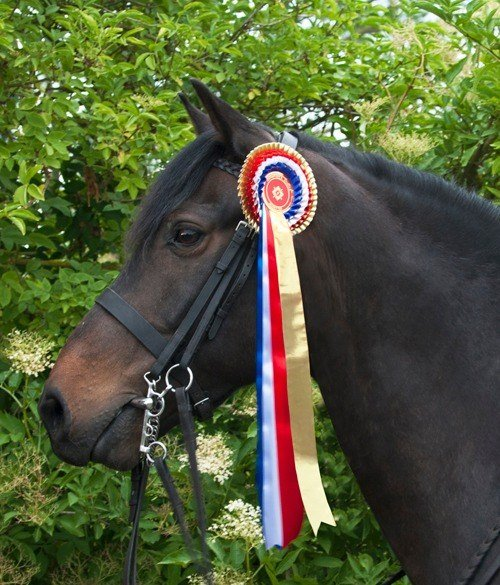 Welcome To Champions Choice Rosettes