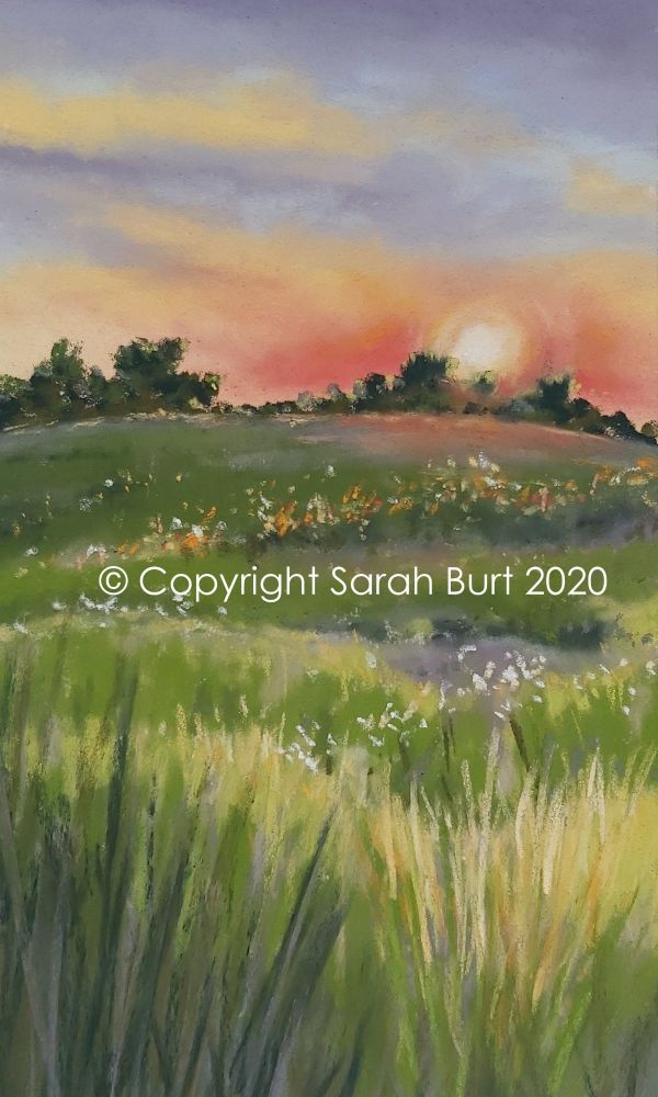 New Pastel - Sunset Over the Gladioli Field