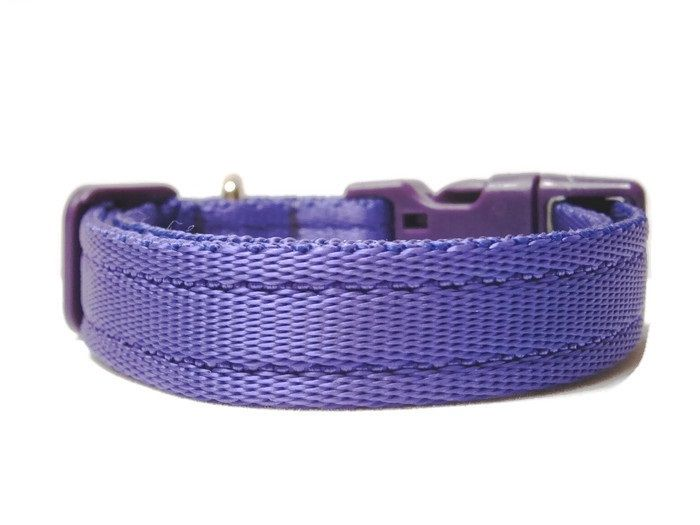 Plain Collar - Purple