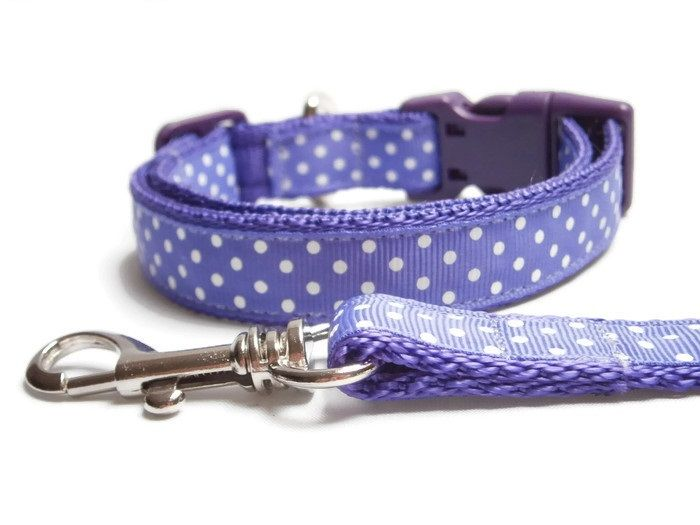 Polka Dot Collar & Lead - Purple
