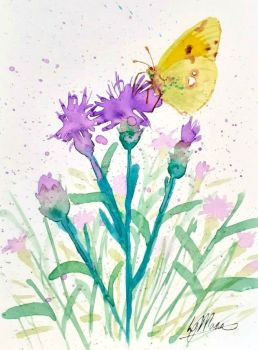 Clouded Yellow Butterfly and Knapweed