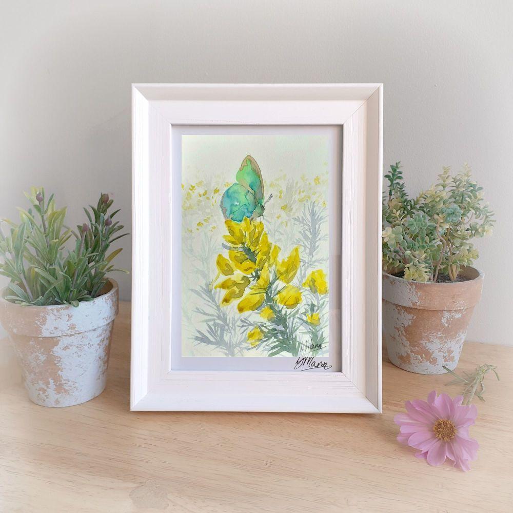 Green Hairstreak Butterfly Framed Gift Print