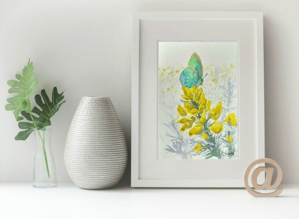 Green Hairstreak Butterfly on Gorse Print