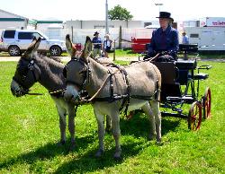 Donkey driven pair