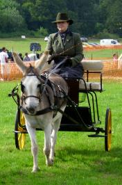 Donkey driven