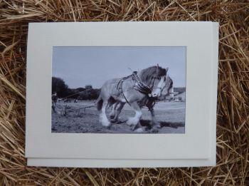 Horses & Donkeys 12