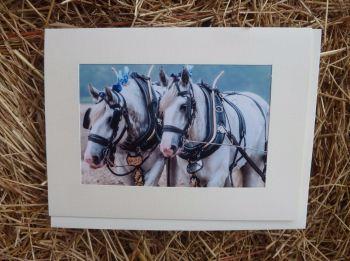 Horses & Donkeys 13